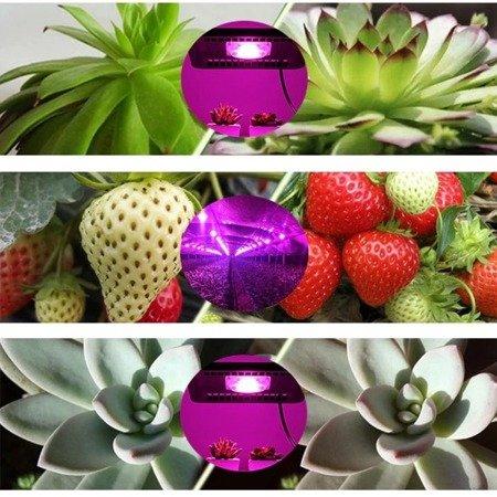 Dioda Power LED 5W - 80-100lm - Full Spectrum - 380-840nm - do uprawy roślin i kwiatów